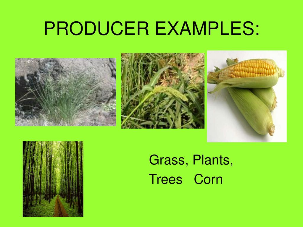 Producers Consumers And Decomposers Ppt Download