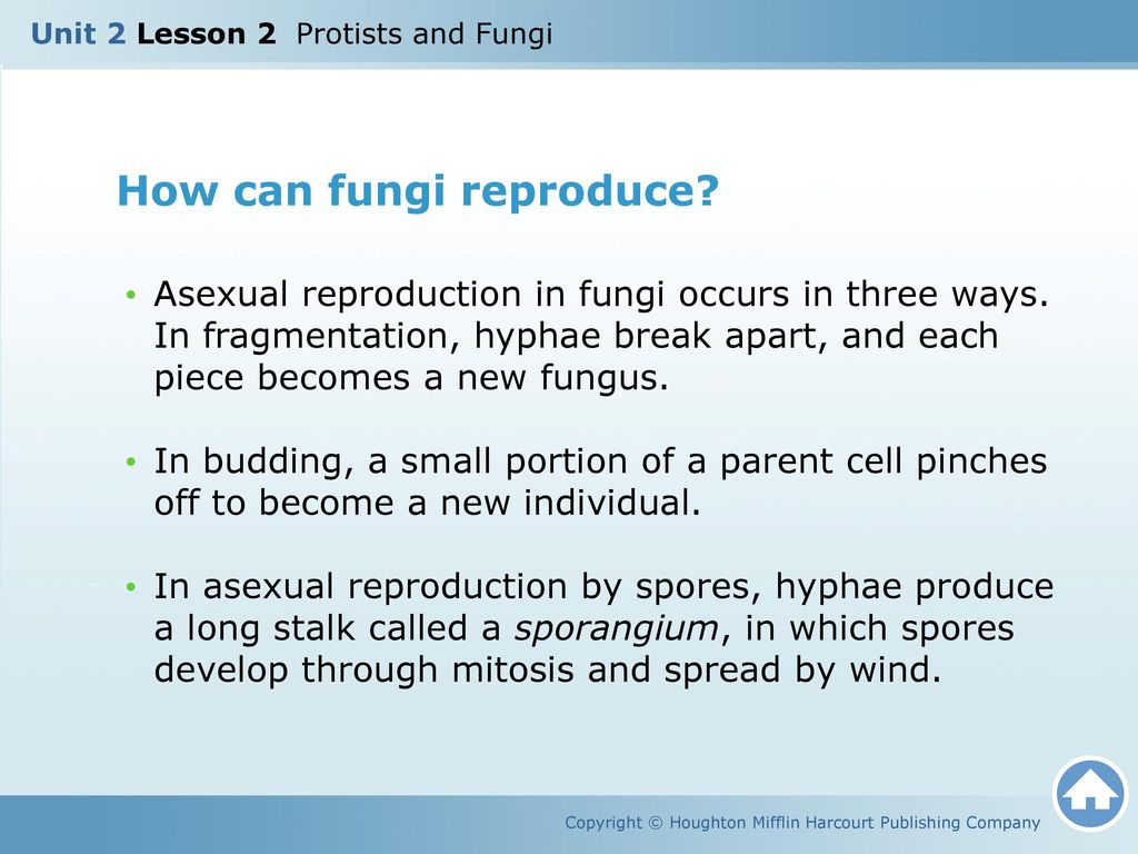 How does fungi reproduce through fragmentation asexual reproduction