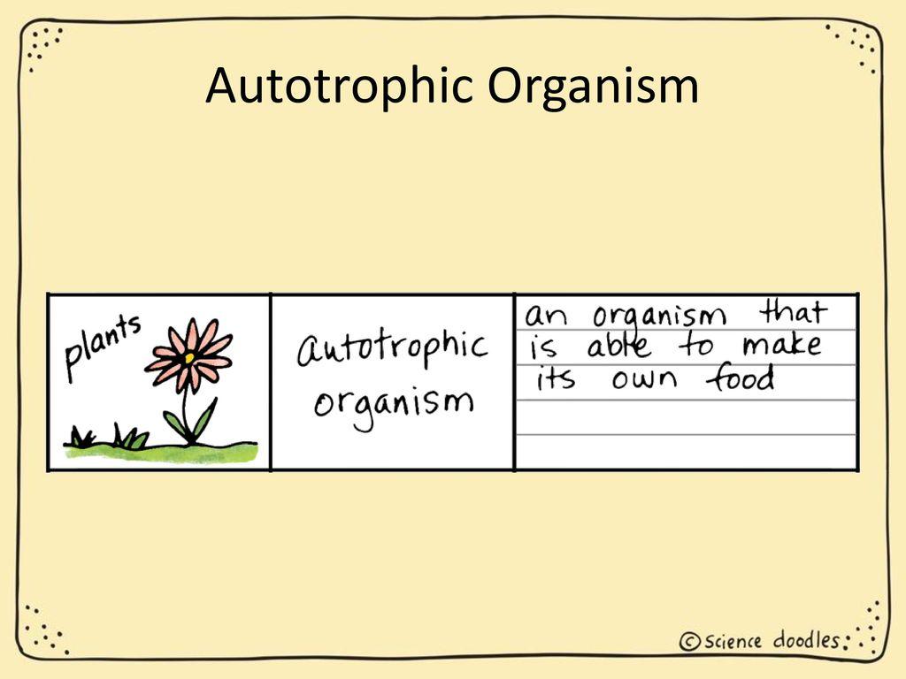 Classification Of Organisms Ppt Download Prokaryoticcelljpg 17 Autotrophic Organism