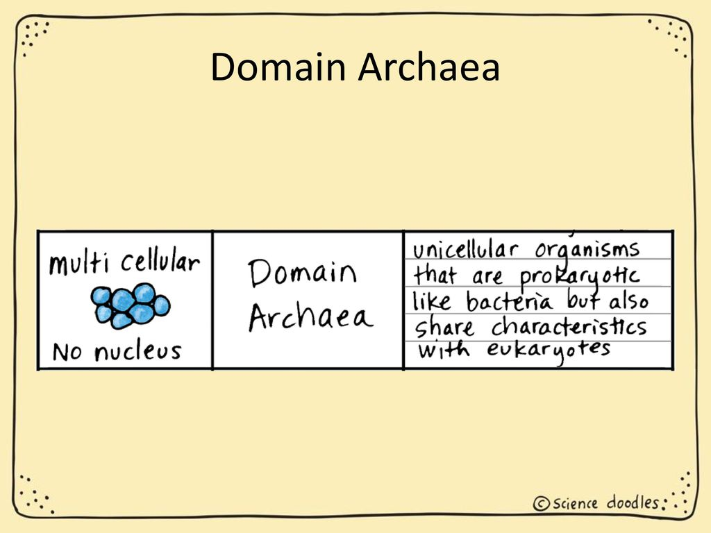 Classification Of Organisms Ppt Download Prokaryoticcelljpg 31 Domain Archaea