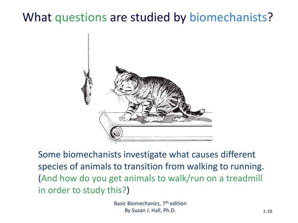 What questions are studied by biomechanists