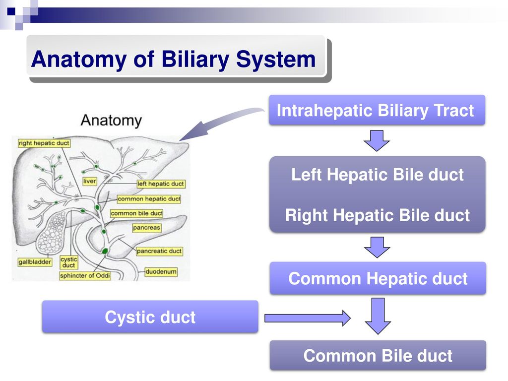 Biliary system SHENG YAN MD. PhD. - ppt download