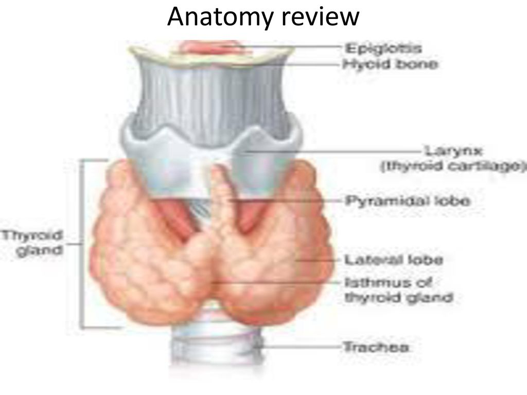 Thyroid Gland Done by : Mohammad Da\'as - ppt video online download