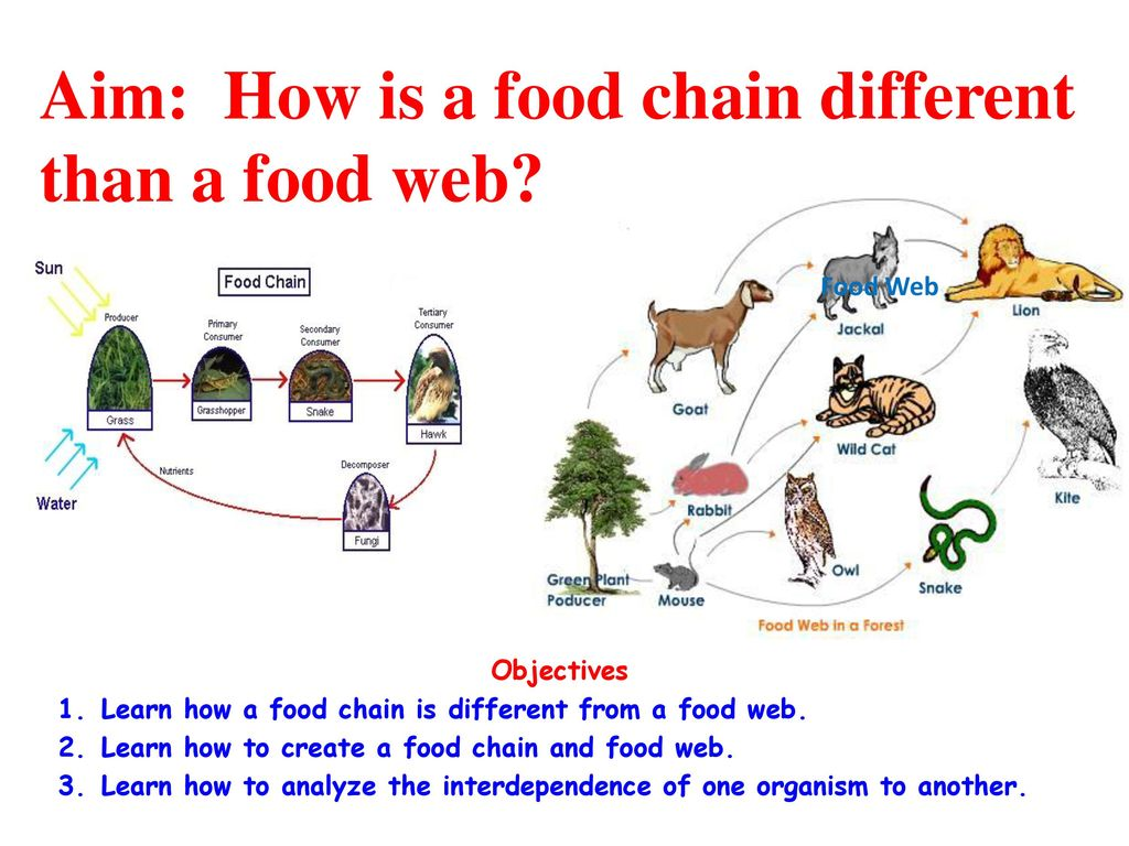 "unbalance of food chain Welcome to my website about marine food chains, how ocean acidification effects  ""food chain: marine food web and  it could possibly unbalance the ocean's."