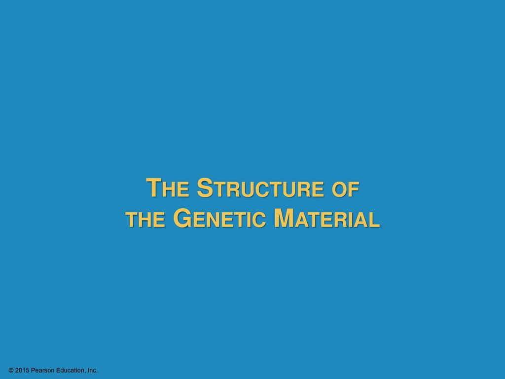 the structure of the genetic material ppt download