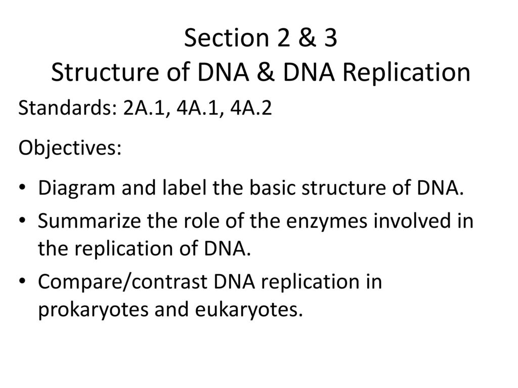 Chapter 12 dna ppt download 3 section ccuart Images