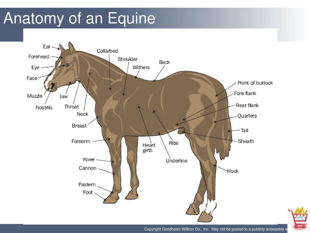 Horse Tail Anatomy Image collections - human body anatomy