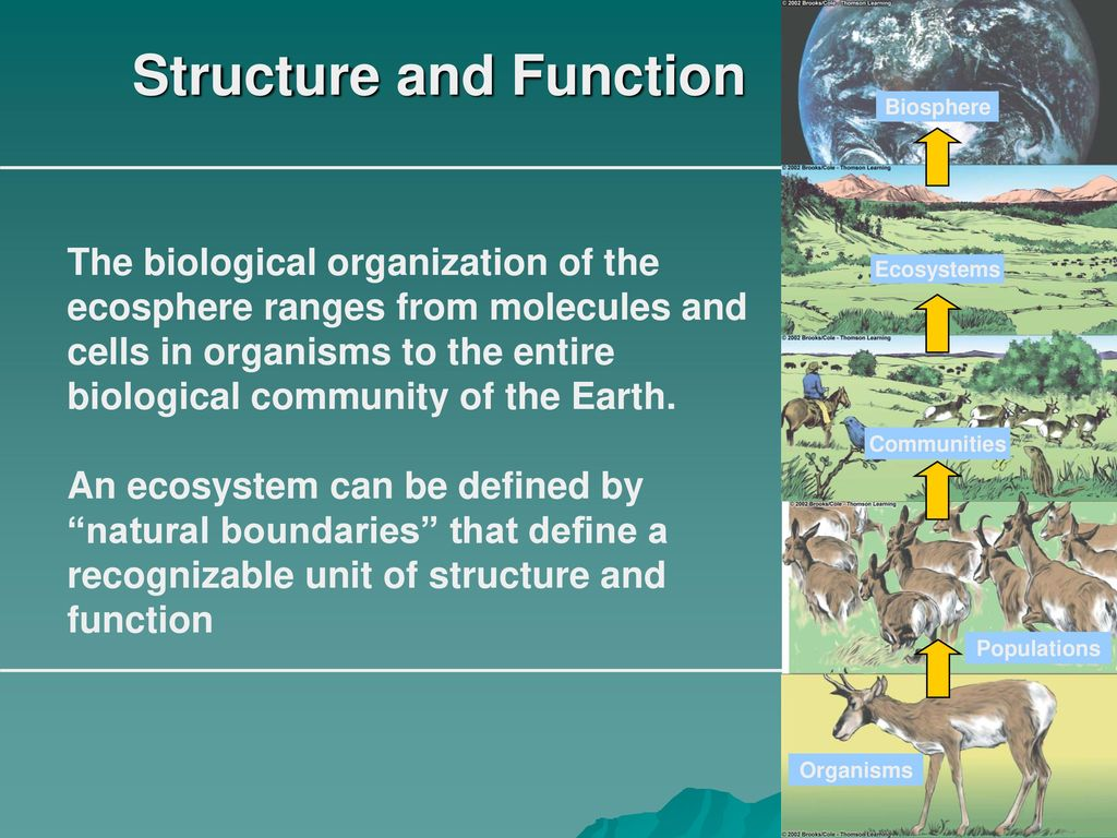 The functions and structure of the biosphere briefly 63