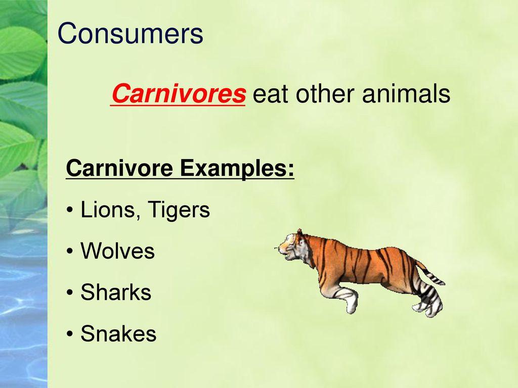 Carnivore turkcewiki. Org.