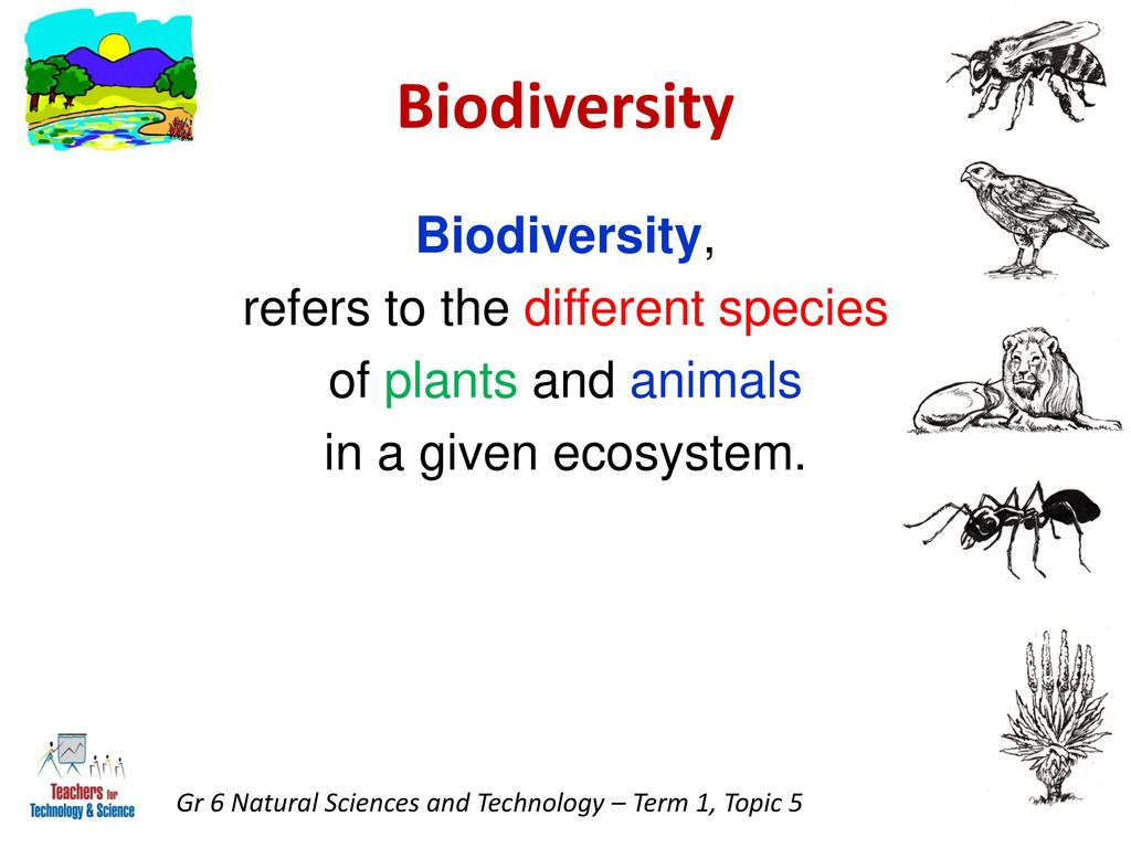 protecting biodiversity through science and technology essay [toc] the australian government recognises the importance of biodiversity conservation and, in collaboration with states and territories, has set a national framework for biodiversity conservation over the next decade biodiversity, or biological diversity, is the variety of all species on earth it is the different plants, animals and micro-organisms, their genes, and the.