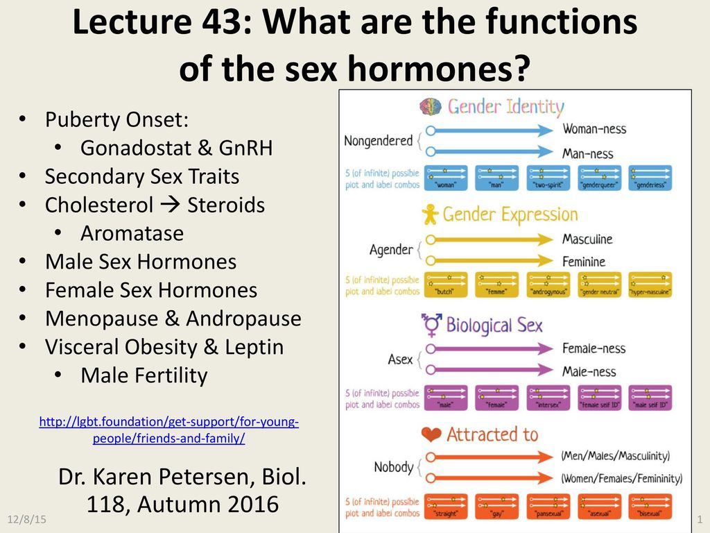 Functions of the main sex hormones