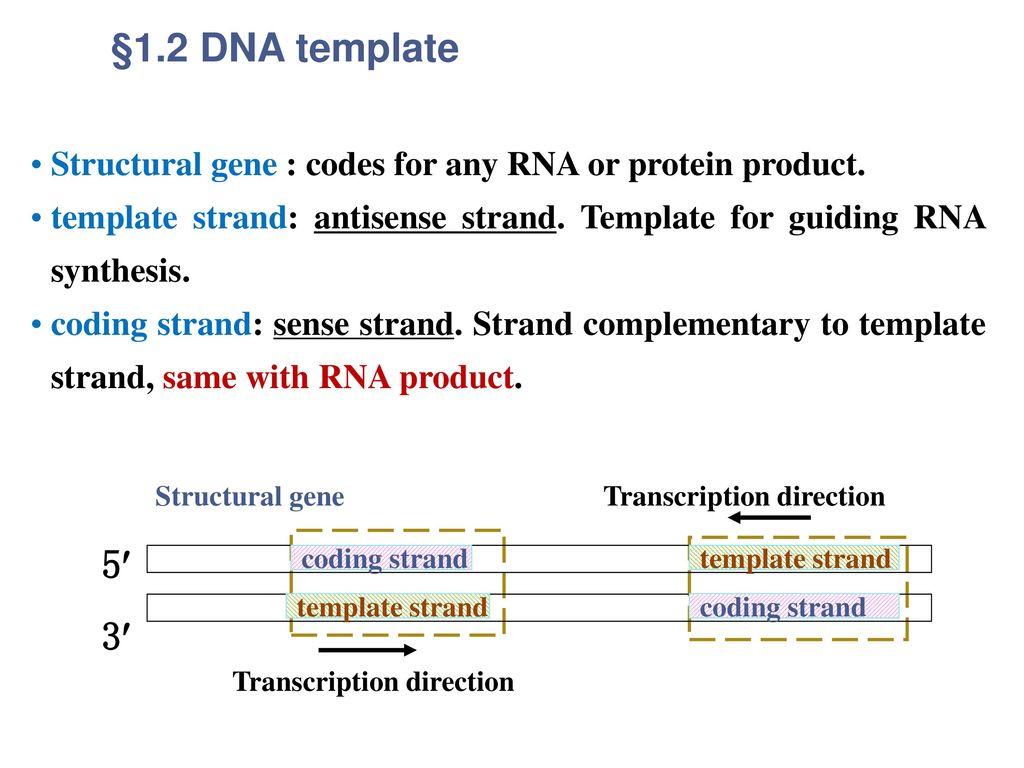 Genetic information transfer (RNA transcription-转录) - ppt video ...