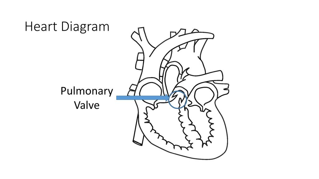 Heart diagram superior vena cava ppt download 6 heart diagram pulmonary valve ccuart Gallery