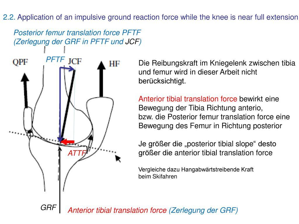 Anatomie Knie… sehr anschaulich - ppt download