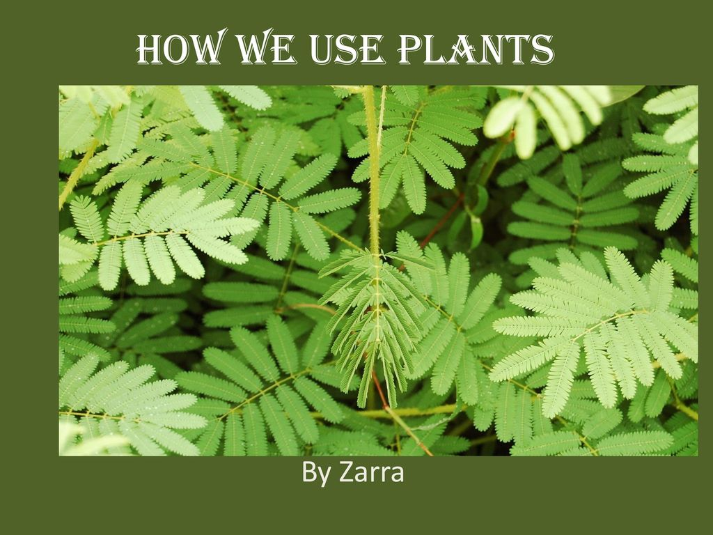 How We Use Plants By Zarra Ppt Download New Kids 1