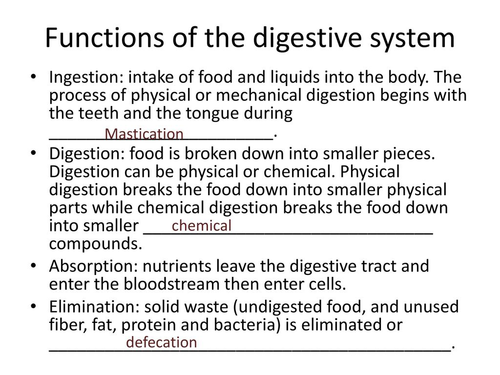 chemical and physical process of digestion review sheet Since digestive enzymes actually function outside the body cells in the digestive tract, their hydrolytic activity can also be studied in a test tube table 1 shows the progressive digestion of proteins, fats, and carbohydrates it indicates specific enzymes involved, their site of formation, and their site of action.