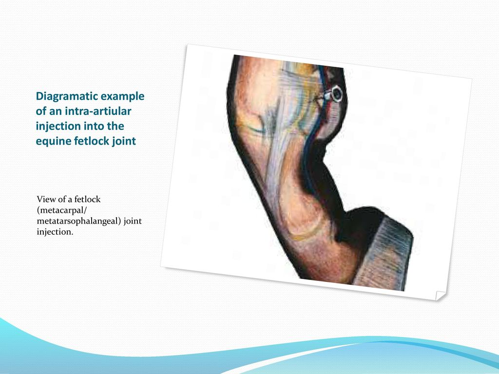 VBA 501: APPLIED ANATOMY ARTHROLOGY AND INTRA ARTICULAR INJECTIONS ...
