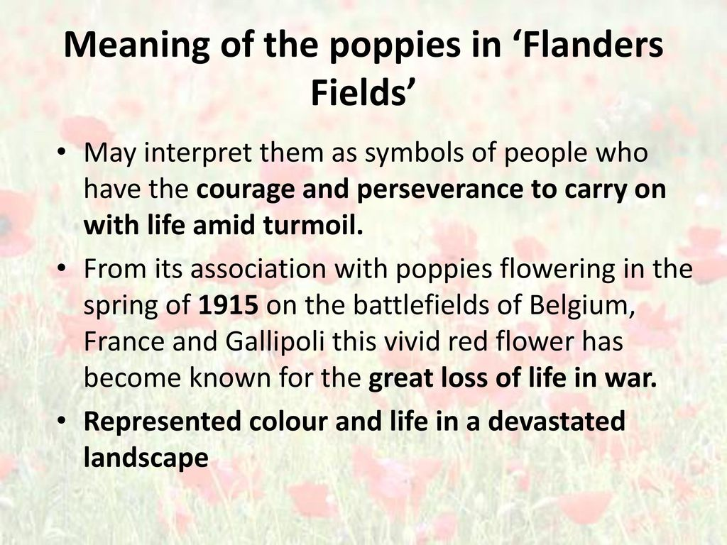 In Flanders Fields Wwi Poem John Mcrae Ppt Video Online Download