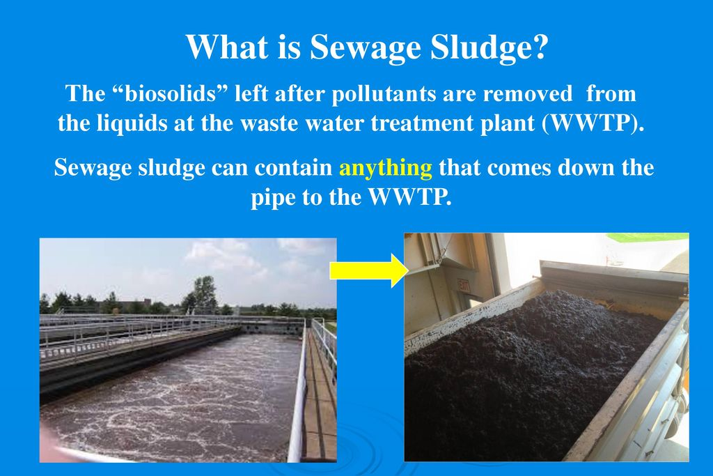 Sludge In Our Waters Elaine Chiosso, Haw Riverkeeper  - ppt