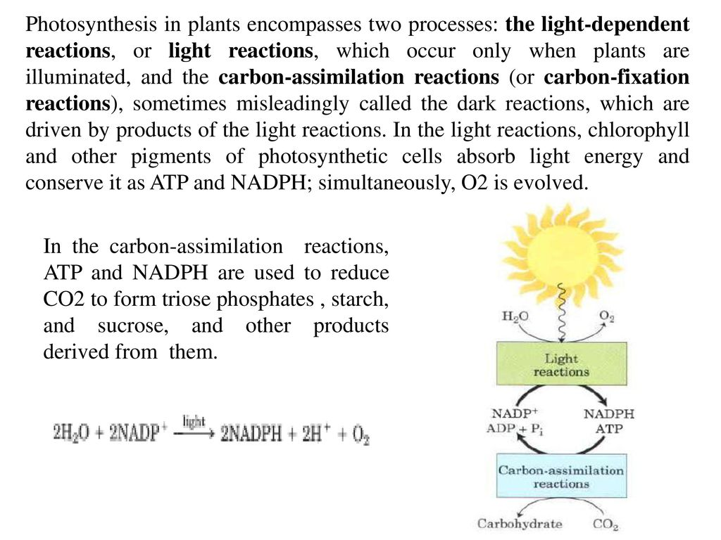From derive carbon organisms photosynthetic their