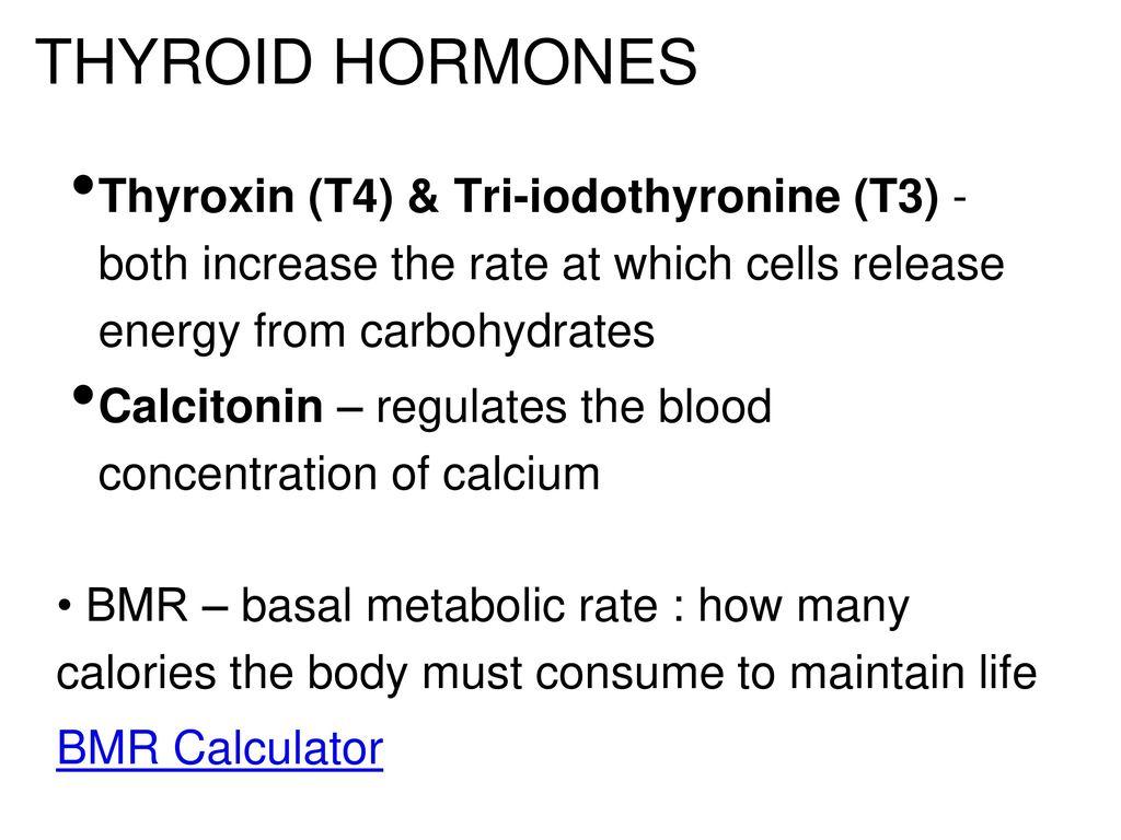 The Endocrine System  - ppt download