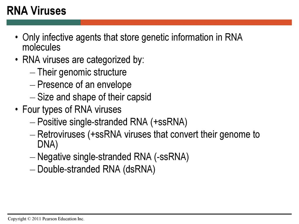 chapter 25 pathogenic rna viruses ppt download RNA Examples 2 rna