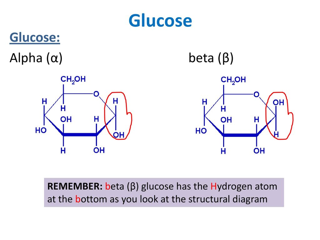 Hydrogen Atom Diagram Glucose Diy Enthusiasts Wiring Diagrams Oxygen Carbon Based Life Where Is On The Periodic Table Ppt Download Rh Slideplayer Com Simple Argon