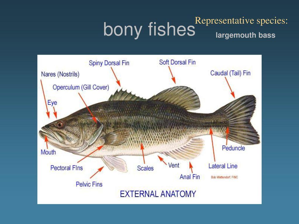 External Anatomy Fish Gallery - human body anatomy