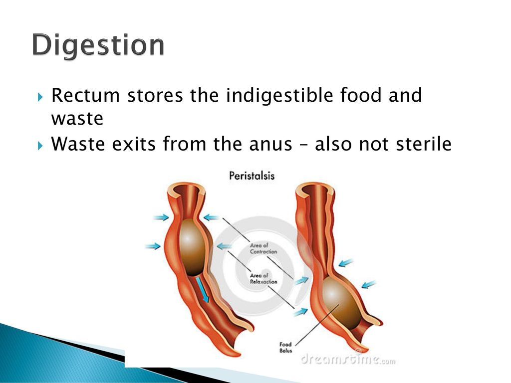 Gastrointestinal Digest This!. - ppt download