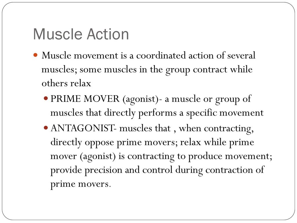 Muscle Anatomy Chapter ppt download