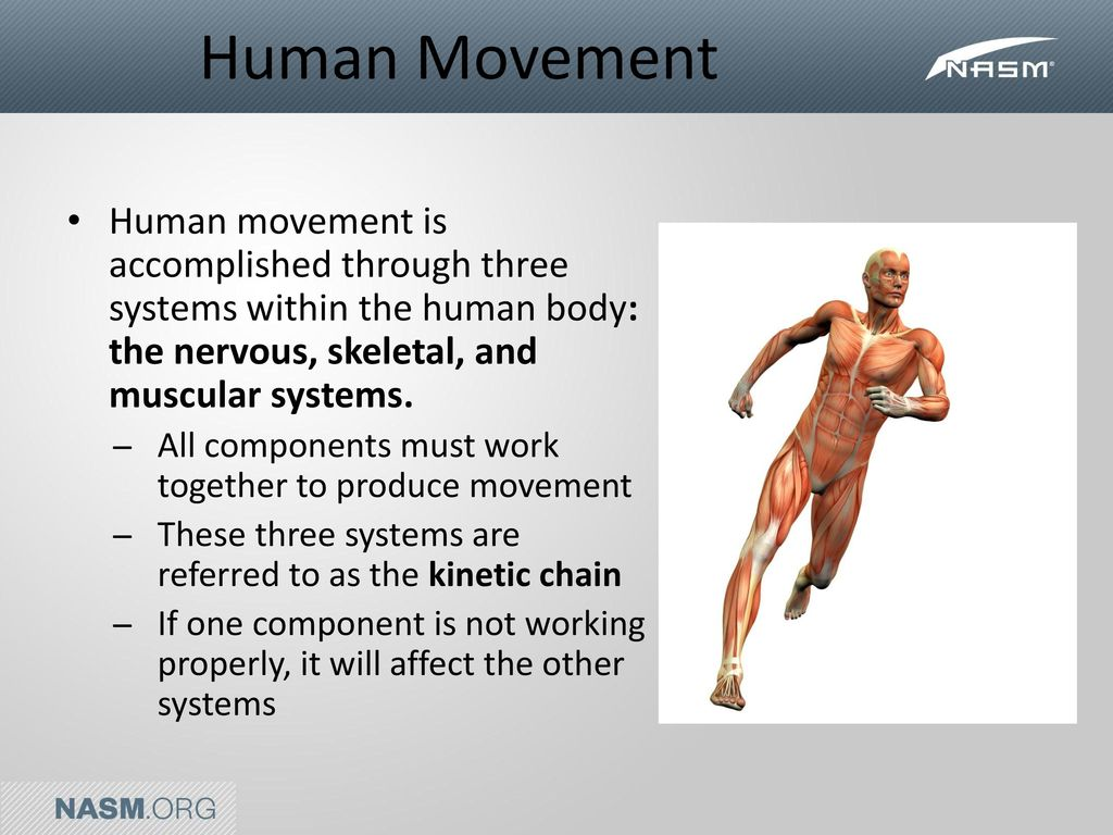Introduction To Human Movement Systems Ppt Video Online Download