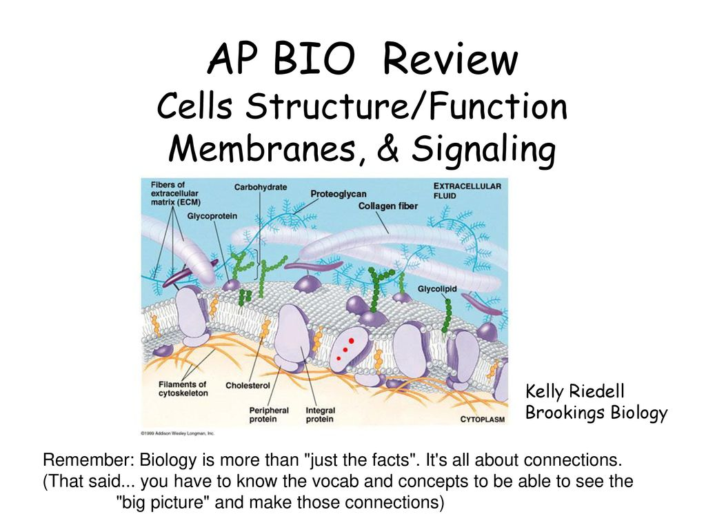 AP BIO Review Cells Structure/Function Membranes, & Signaling - ppt ...