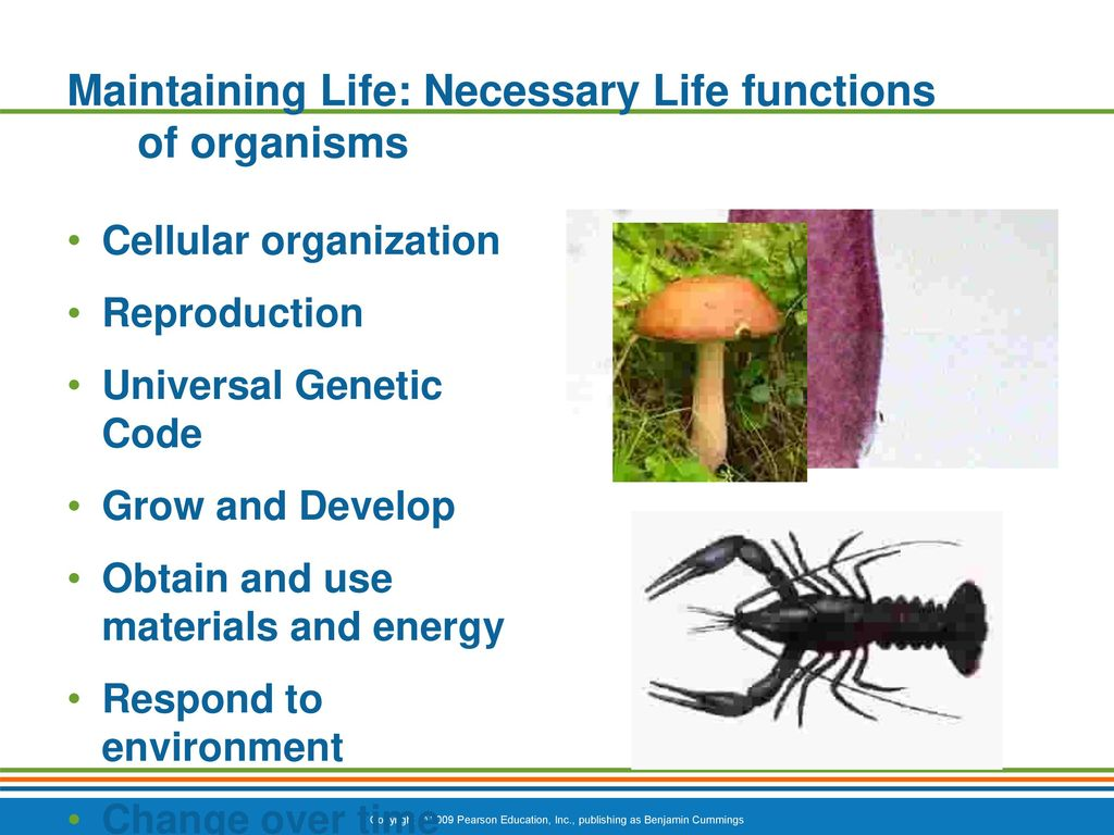Fantástico Necessary Life Functions Anatomy And Physiology ...