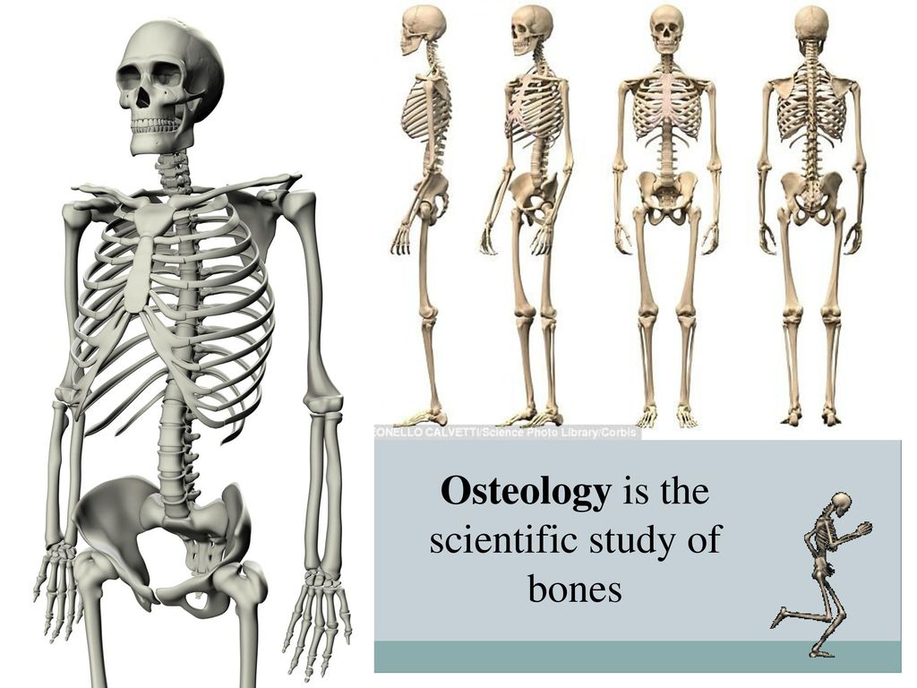 Department of human anatomy - ppt download