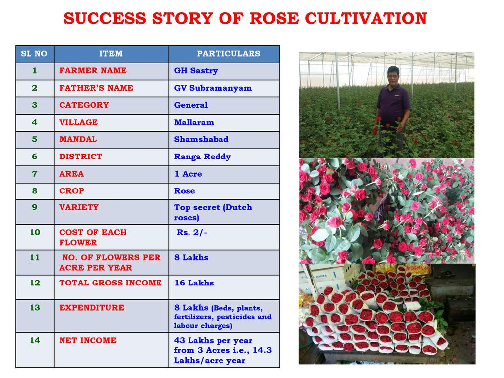 DEPARTMENT OF HORTICULTURE TELANGANA STATE - ppt download