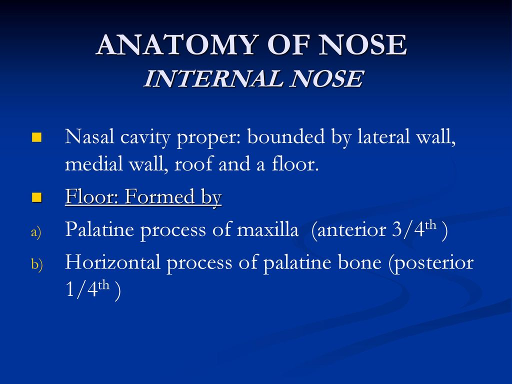 Anatomy Of Nose External Nose Ppt Video Online Download