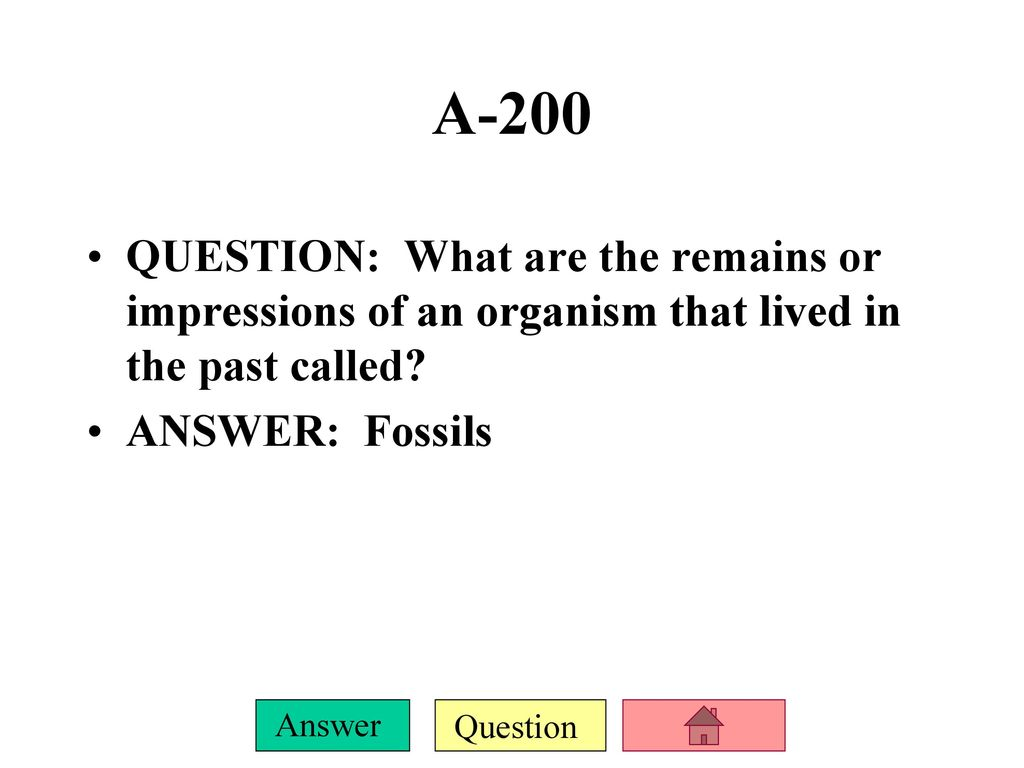Dating the fossil record answers