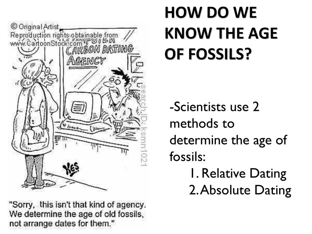 How do scientists use relative hookup to determine the age of a fossil