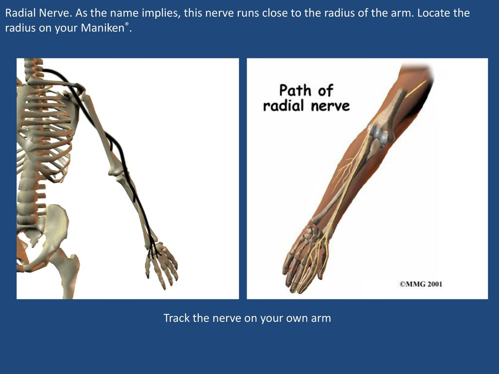 Human Body Systems You\'ve Got Nerve - ppt download