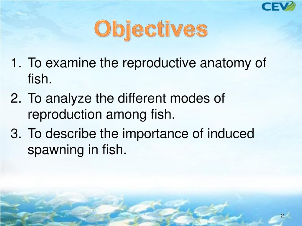 Reproduction Of Fish Ppt Video Online Download