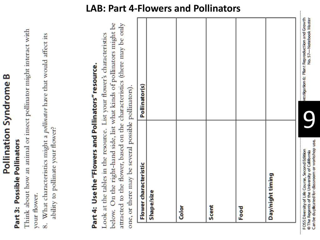 Protists, Fungi & Plants Unit - ppt download