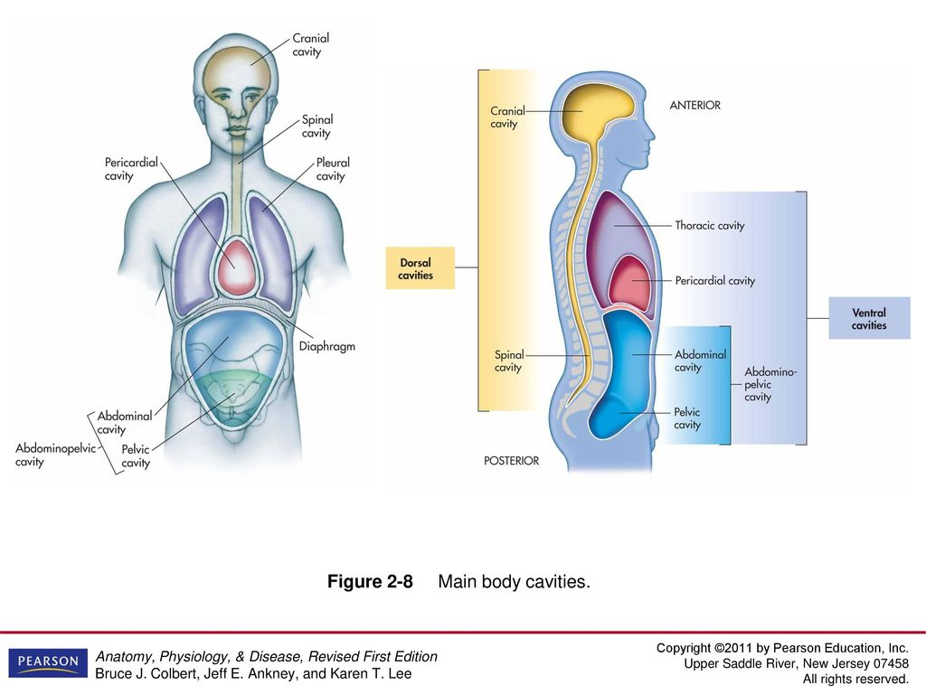 Chapter 2 The Human Body: Reading the Map. - ppt video online download
