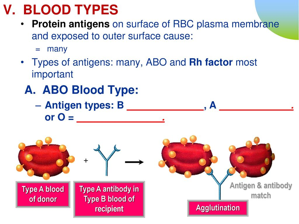 Match what blood types Who You