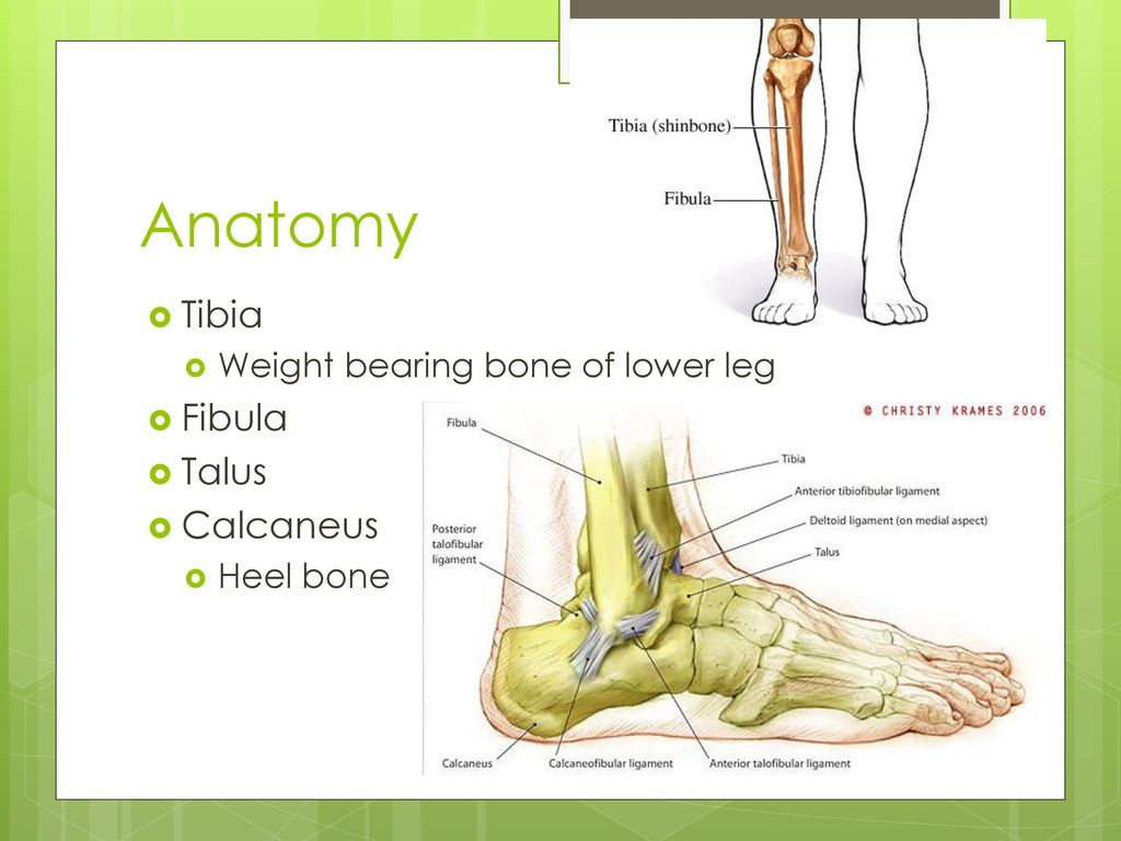 Unit 3: Lower leg, foot, ankle - ppt download