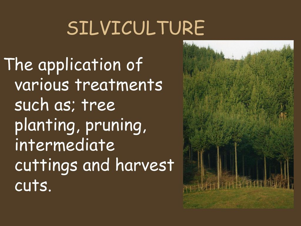 SILVICULTURAL PRACTICES - ppt download