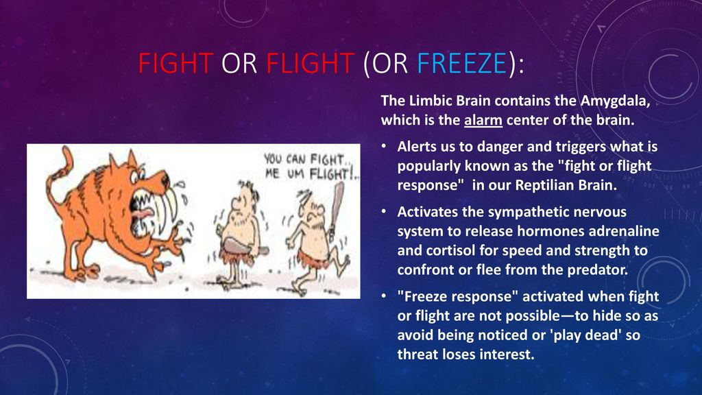 Stress and Stress Management - ppt download