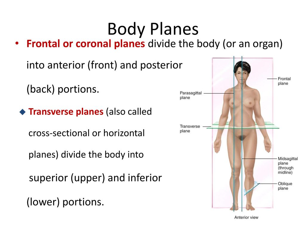 Anatomical Terminology - ppt download