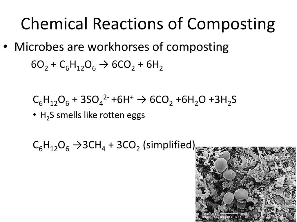 The Science of Composting - ppt download