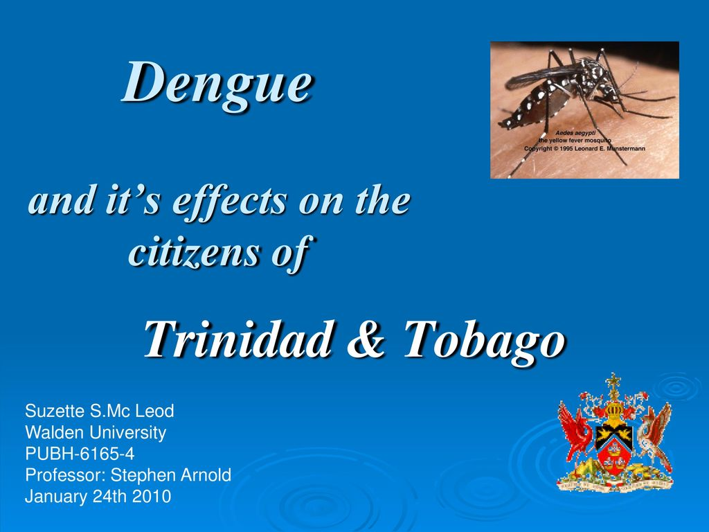 Dengue Fever Infects La Fte De >> Dengue And It S Effects On The Citizens Of Ppt Download