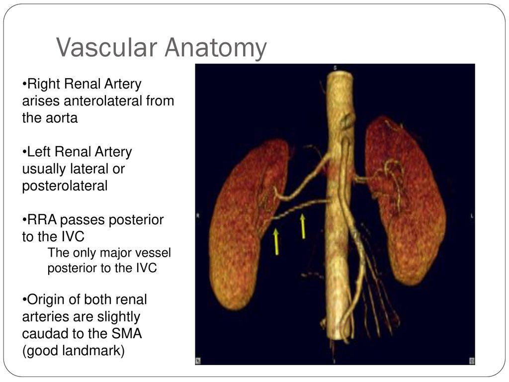 Abdominal Vascular Ultrasound - ppt download